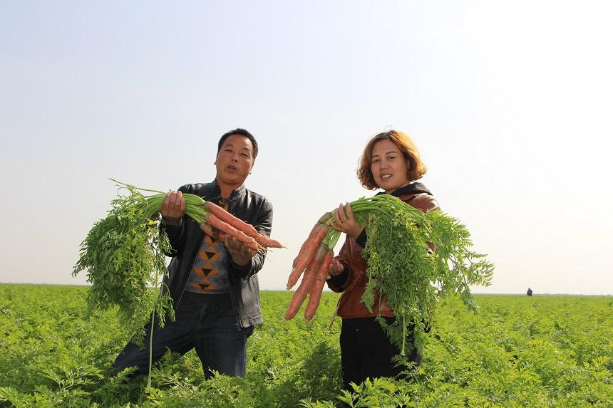 大荔县荔盛萝卜专业合作社